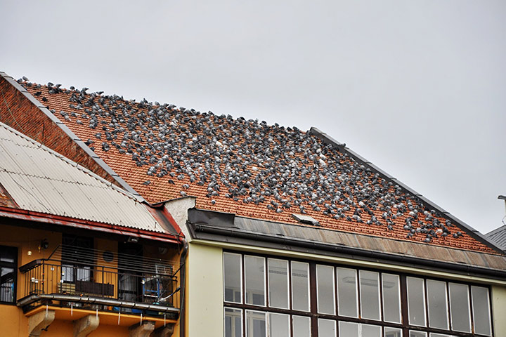 A2B Pest Control are able to install spikes to deter birds from roofs in Dartford.