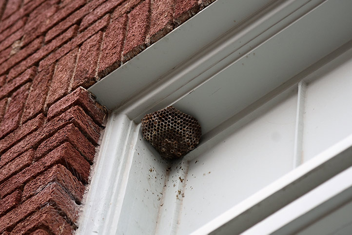 We provide a wasp nest removal service for domestic and commercial properties in Dartford.
